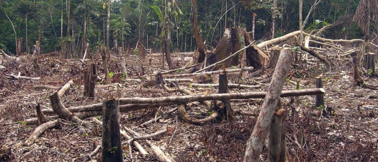 Trotz Krise: deutsch-brasilianisches Engagement gegen Klimawandel, für Biodiversität und urbane Mobilität